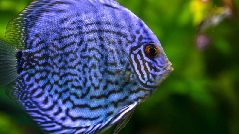 LEMMIK | Põhjalik ülevaade, mida peaksid teadma enne kui tood koju kalaakvaariumi