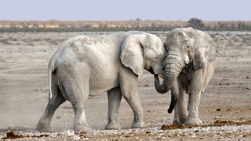 Miks on suured imetajad väikestest aeglasemad?