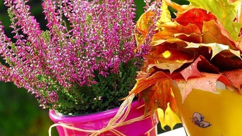 PANE TÄHELE: see on septembrikuu aiatööde meelespea!