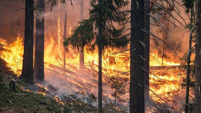 KASULIKUD OSKUSED: kuidas pääseda metsatulekahju eest?