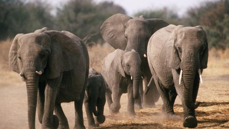 VERESAUN: salakütid tapsid 87 elevanti