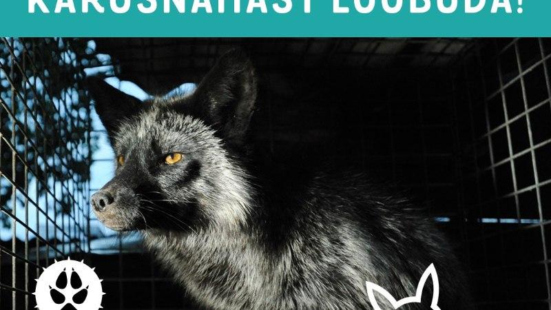 Suured moebrändid on karusnaha kasutamisest loobunud, kuid Prada puikleb vastu