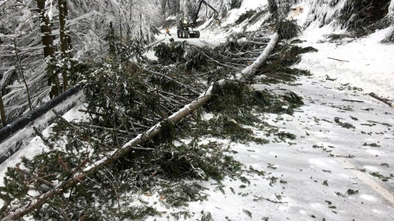 KOHUTAV: lume raskuse all murdunud puu tappis üheksa-aastase poisi