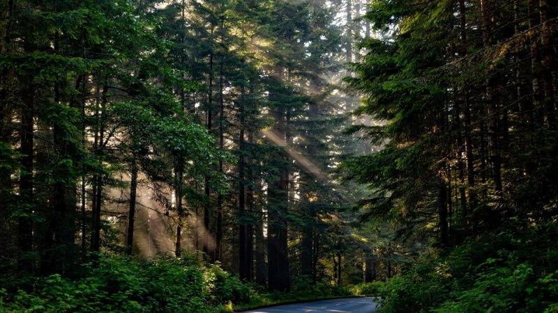 OH EI! Puud ei tarbi enam piisavalt süsinikku