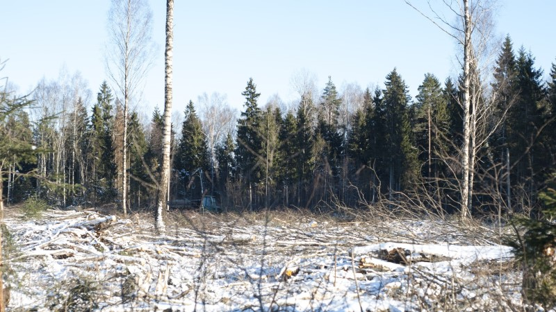 Keskkonnaaktivistid ei suutnud metsa raiest päästa