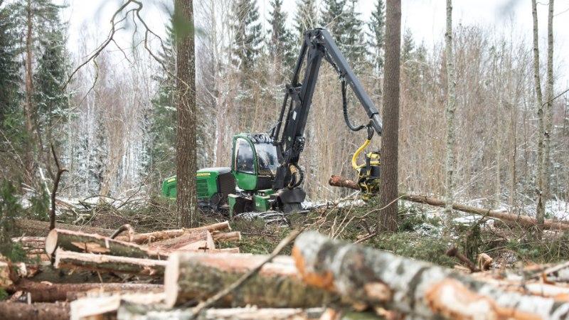 PILK PARTEIDELE | Metsakaitsja: Elurikkuse Erakond arvestab metsaga kõige rohkem, Isamaalt pole oodata midagi head