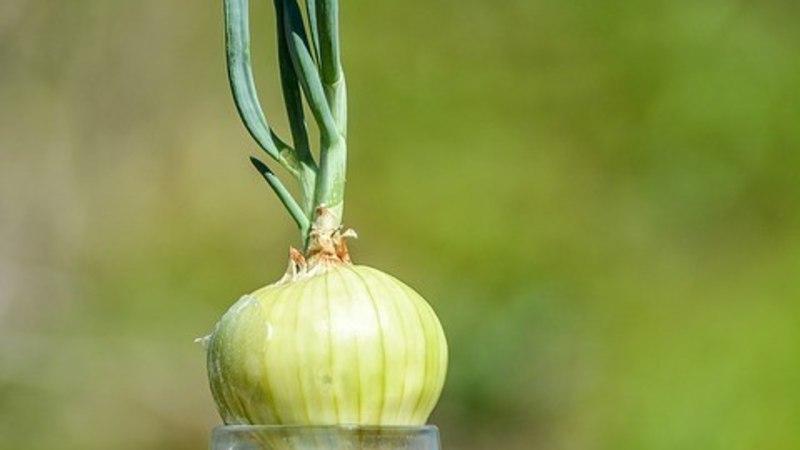Proovi järele! Kasvata juurikast uus taim