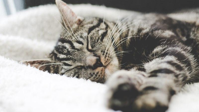 Kass vajab vitamiine: kasvata talle ise muru
