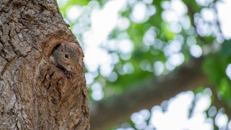 Mida teha, kui metsloomad näksivad aias puid?