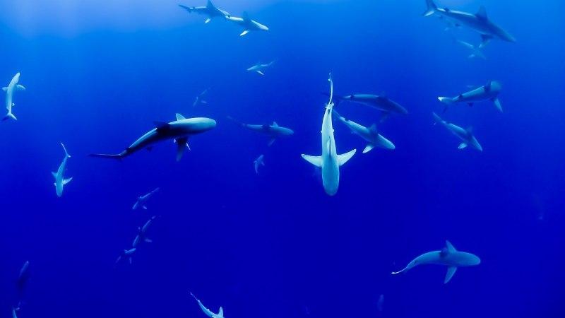 Школьник на спор прыгнул в кишащую акулами воду и выжил