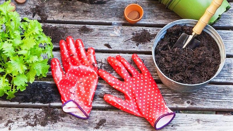 5 asja, milleta aias hakkama ei saa
