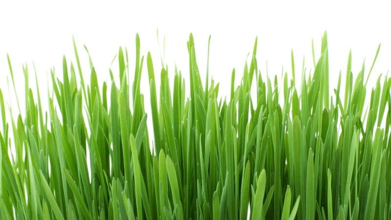 VAATA JA JÄTA MEELDE   Mida aprillis aias ära teha!
