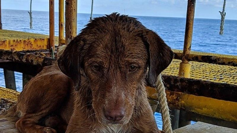 Истощенного пса нашли в открытом море за сотни километров от берега