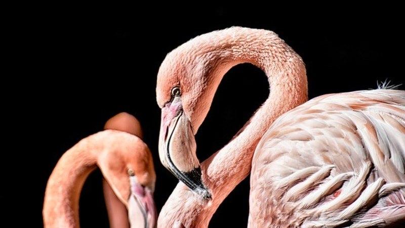 Flamingo tõkestas lennuki maandumist