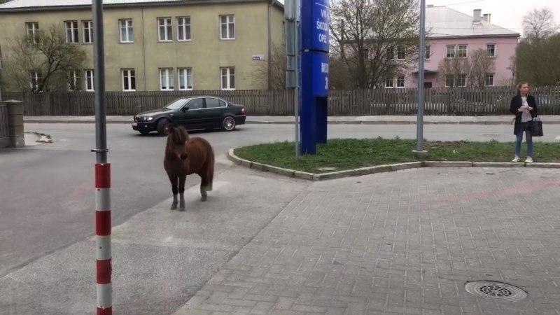 VIDEO | Tallinnas eksles aiast lahti pääsenud poni