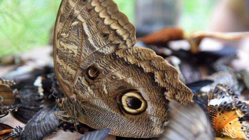Ema ja tütar rajasid eksootilise liblikamaja: vahel küll vaidleme, kuid see mõjub ettevõtmisele ainult arendavalt