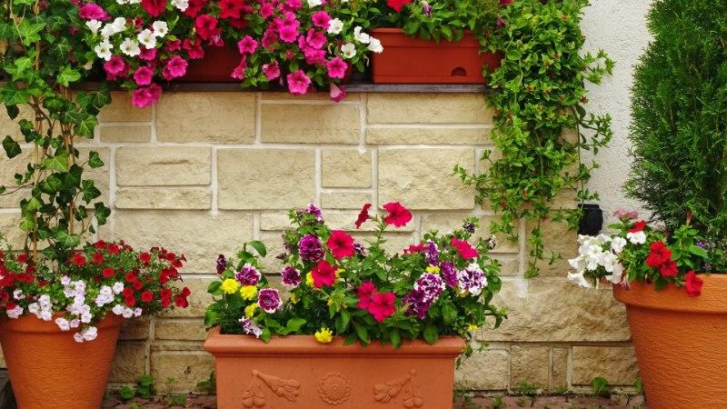 Spetsialist annab nõu: milliseid suvelilli valida lillekasti?