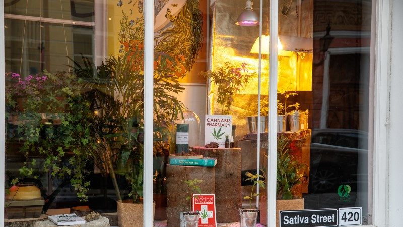 KOLLEKTSIONÄÄRIDE RÕÕM?! Tallinna vanalinnas õitseb peaaegu legaalne kanepiäri