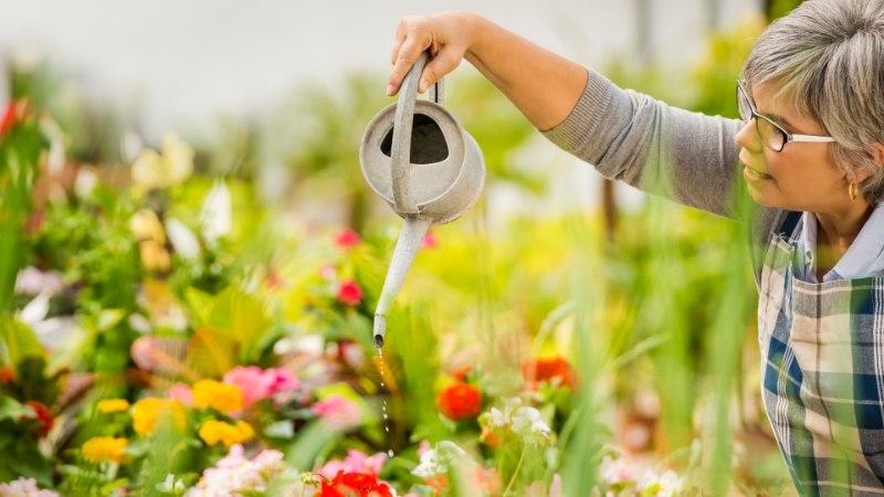 Kuidas väetada nii, et kõik sinu lilled tooksid rohkelt rõõmu?