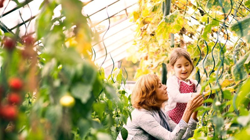 Kas sina oled neid taimi oma kasvuhoones kasvatanud?