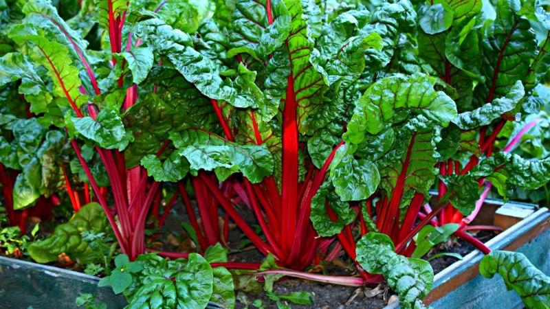 NEID TASUB KASVATADA: 9 köögivilja ja ürti, mis leevendavad depressiooni ja tõstavad vaimset erksust