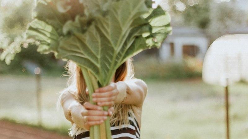 Erakorralise meditsiini osakonna õde hoiatab: enim taimemürgistusi on seotud piibelehe ja ussilakaga