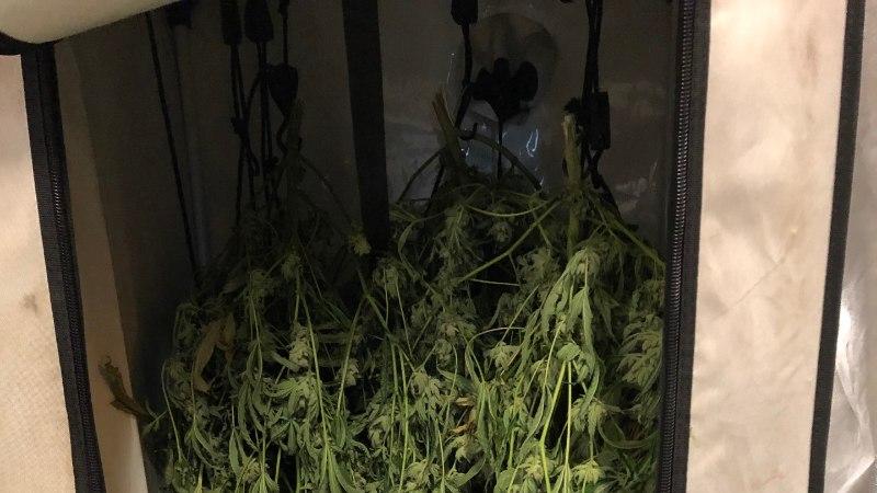 FOTOD JA VIDEO | Politsei leidis Mustamäe laoruumist kanepikasvanduse