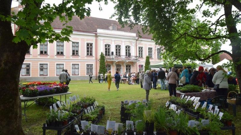 GALERII | Roosna-Allikul toimub festival eestlaste kevadise lemmiku rabarberi auks