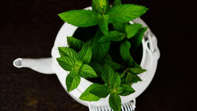 SÖÖD NII, ET KÕHT ON KUMMIS? Need taimed ja vahendid leevendavad suviseid kõhuhädasid